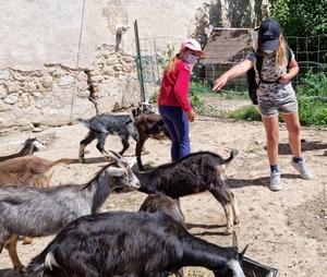 Rencontre des enfants du Centre aéré avec les chèvres