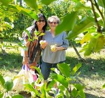CCAS : activité ramassage de pommes pour nos aînées !